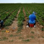 Latino leaders demand Fla. governor apologize for linking 'Hispanic farmworkers' to COVID-19 rise