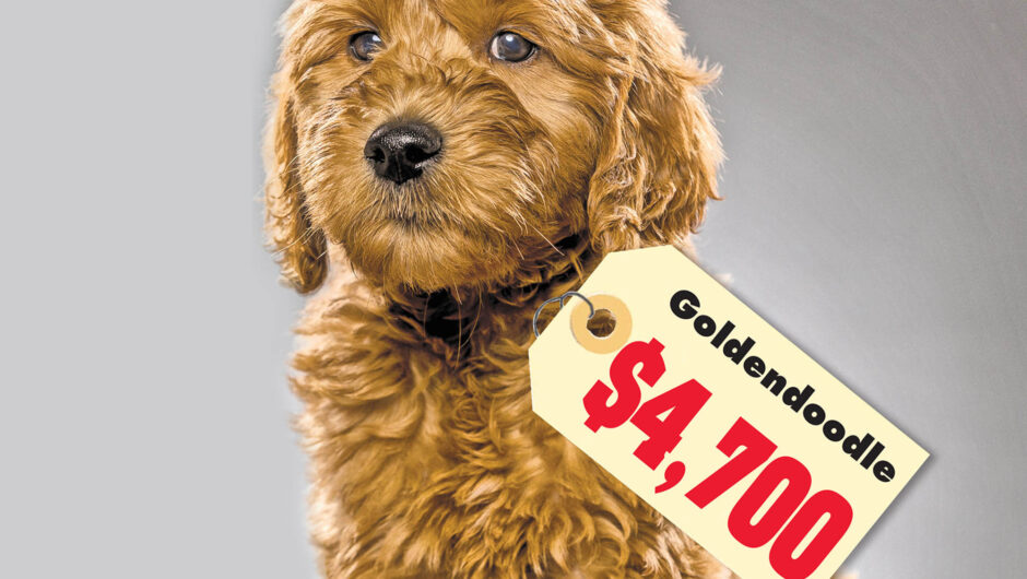 COVID-19 is sending pedigree puppy prices through the roof