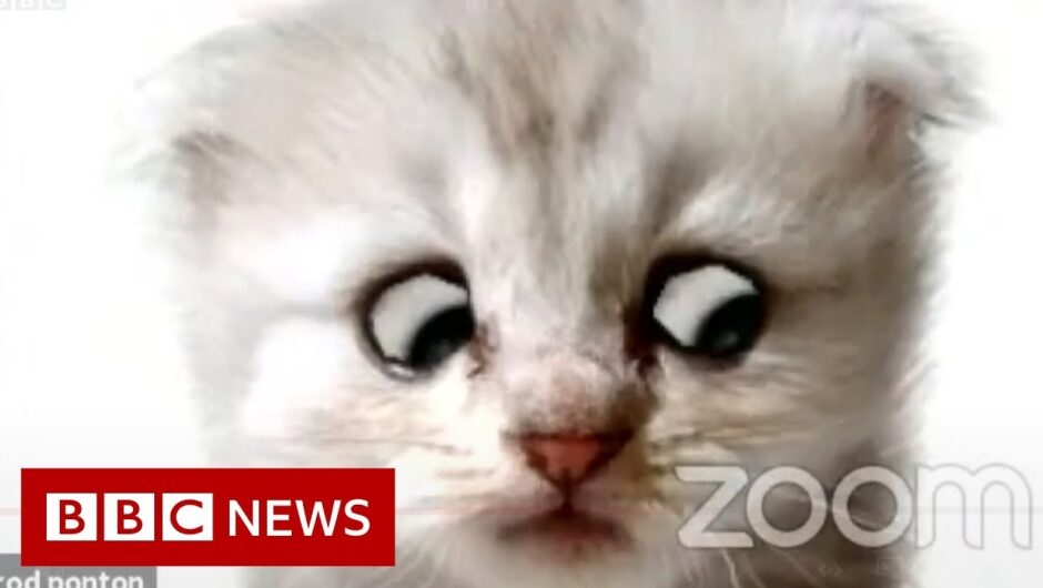 Lawyer uses Zoom filter by mistake – 'I'm not a cat' – BBC News